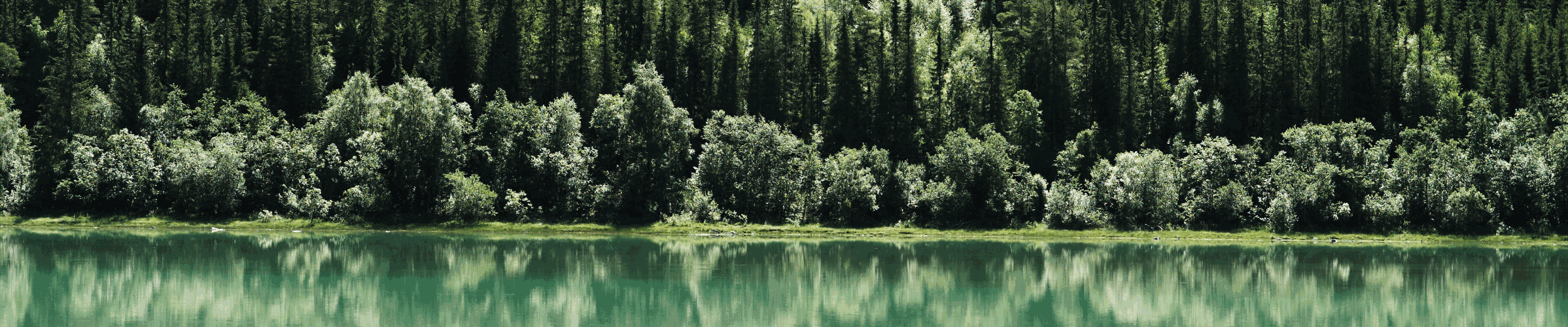 Forest reflected in lake
